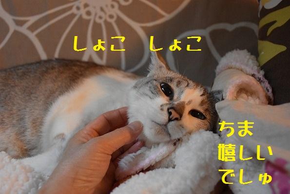 猫缶は食べる