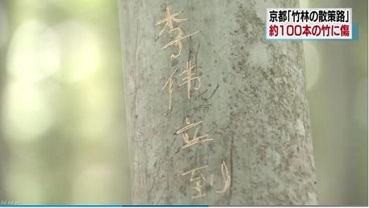 NHK「竹林の散策路」約100本の竹に文字のような傷 京都 嵐山NHK