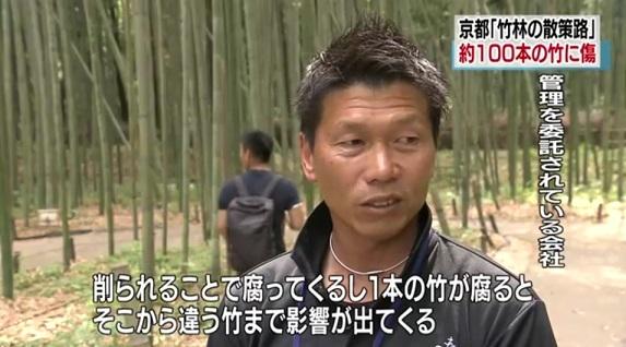 「竹林の散策路」約100本の竹に文字のような傷 京都 嵐山NHK