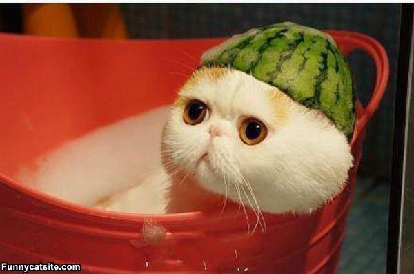 0427watermelon_hat