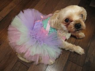 犬用チュチュ_パステルレインボー_結婚式