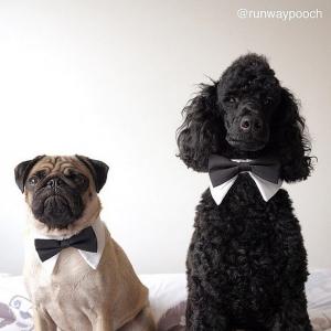 犬用蝶ネクタイ_結婚式_通販