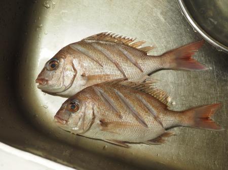 小鯛の煮付け057