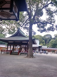 DSC_3020 (1)氷川神社