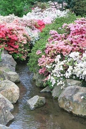 小川と菜の花esize