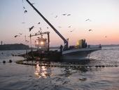 江の島片瀬漁業協同組合