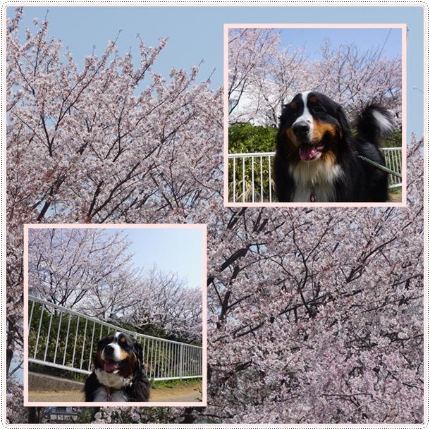 2018-4エルフと大和と桜