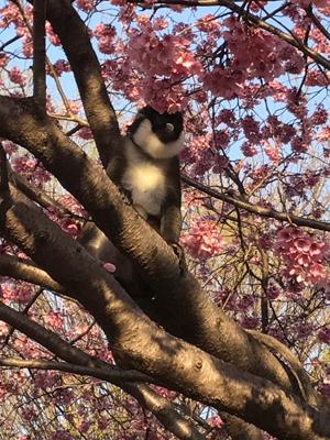 新井薬師神社に猿blog01