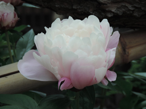 20180513本行寺blog06