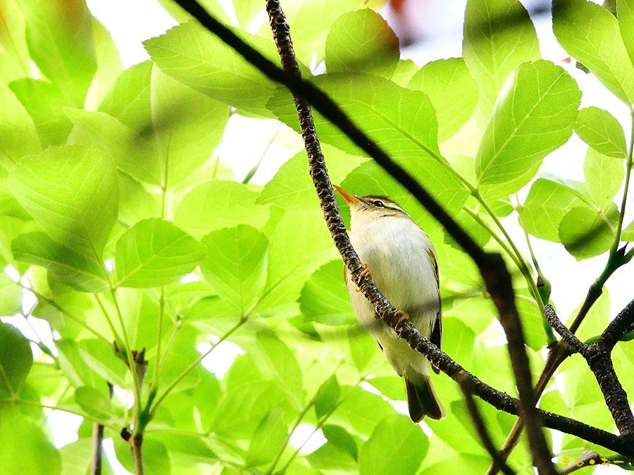 SENDAIMUSHIKUI-78b.jpg