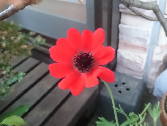 anemone180420.jpg