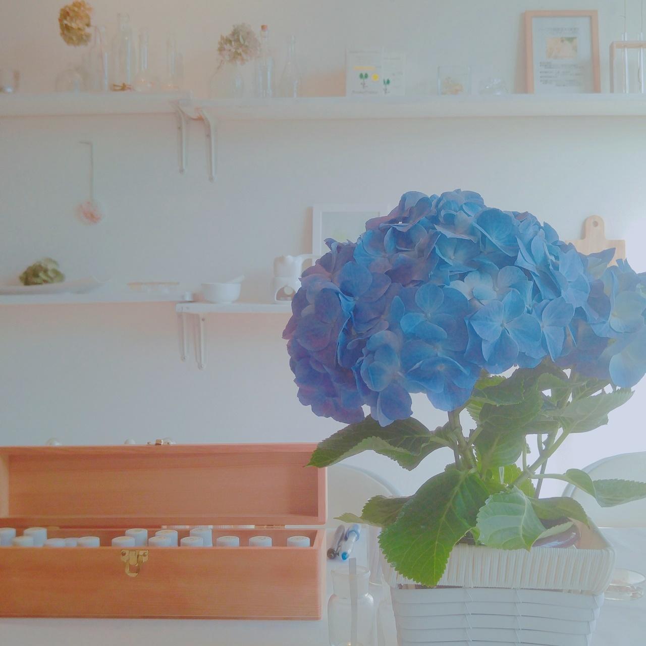 日程変更のお知らせ~フラワーレッスン!ふんわり小花のフラワーアレンジメント