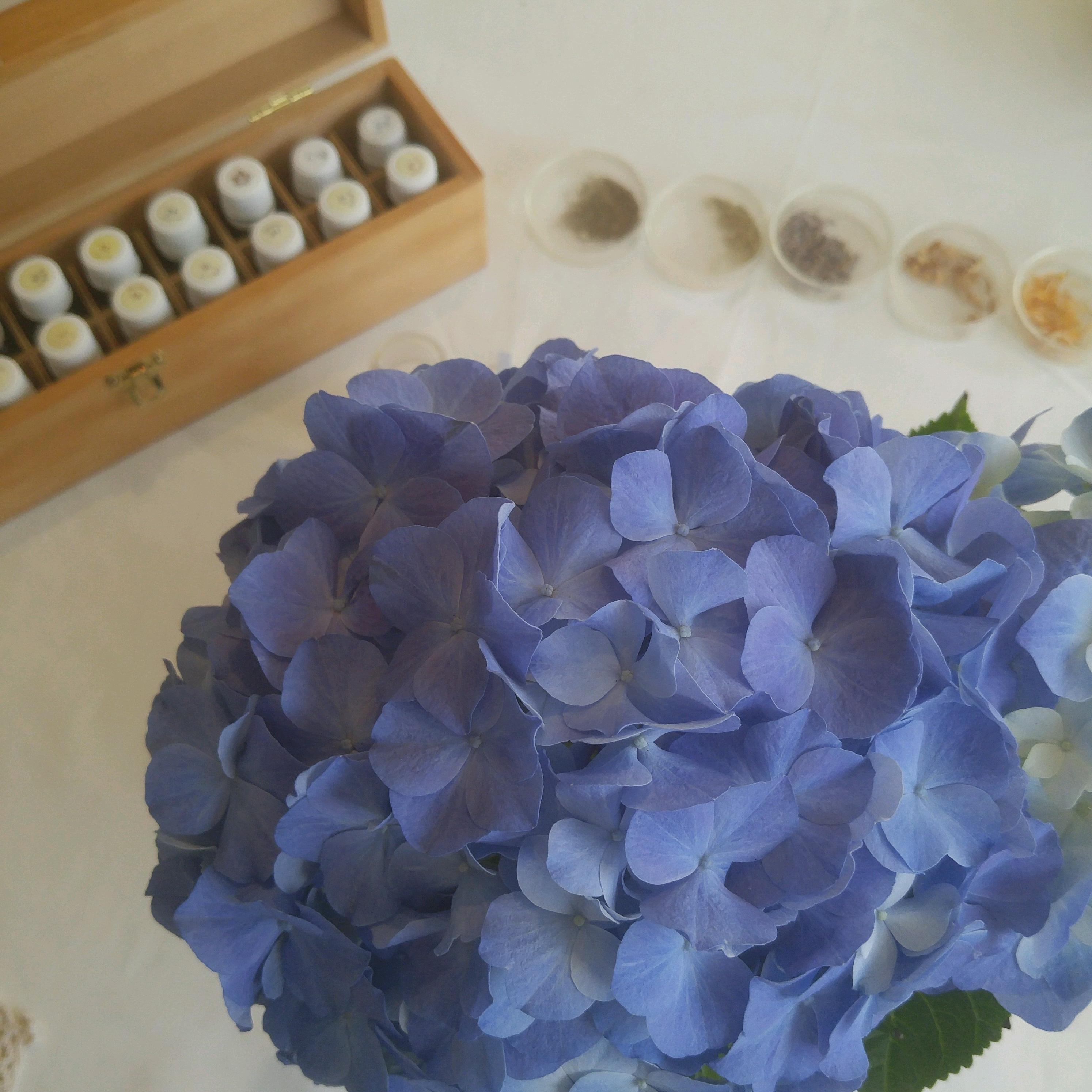 日々のこと~お花と月と小さな芽
