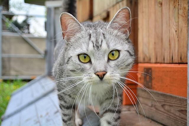 cat-2298137_1280[640]