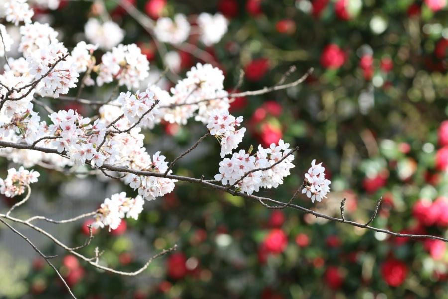 2018-3-31花景色T84A9152