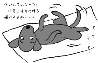 シーツに体をこすりつける犬
