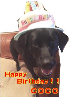 帽子をかぶった犬