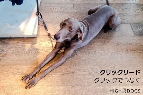 high5dogs-1_201804211516169f7.jpg