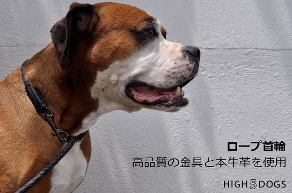 high5dogs-3_20180421151622f7d.jpg