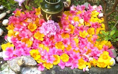 金魚さんたちの庭を彩る花:2018年6月4日撮影