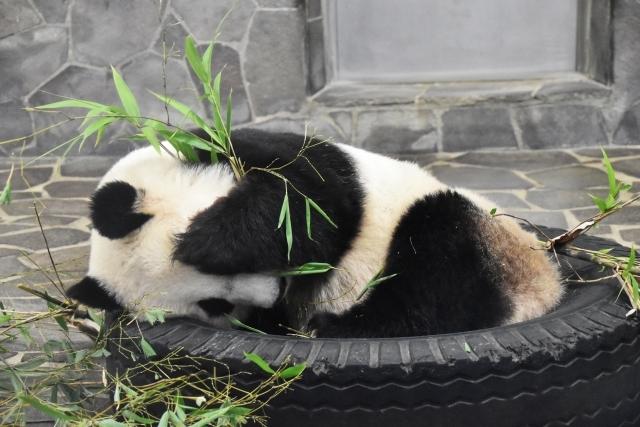パンダ 上野動物園 シャンシャン一周年