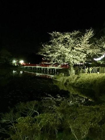2018 八橋と桜ライトアップ
