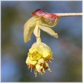 180324E 025黄色い花SQ