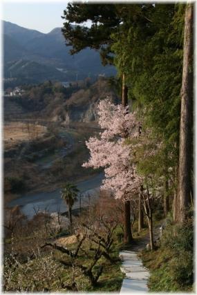 180331E 012荒川と桜23