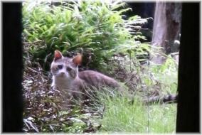 180520E 046耳の大きな猫@大達原32