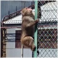 DSC_0863猿@秩父工場SQ
