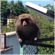 DSC_0864猿@秩父工場SQ