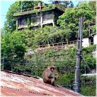 DSC_0876猿@秩父工場SQ