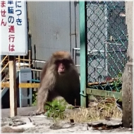 DSC_0862猿@秩父工場SQ