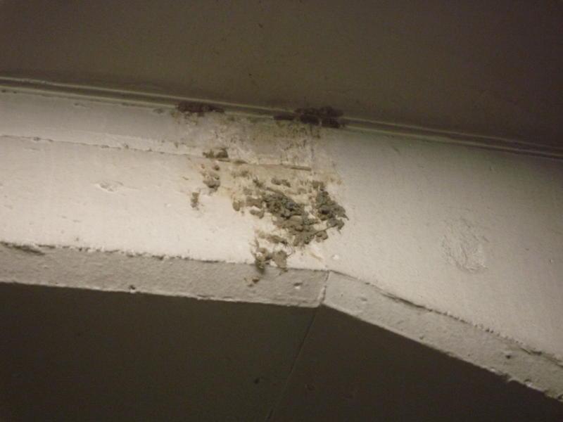 20180418-1-ツバメ巣作り中