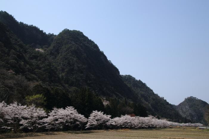 180401-ushi-01.jpg