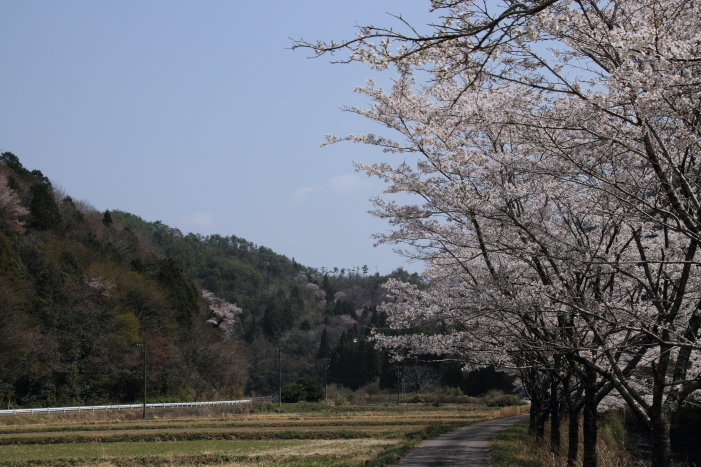 180401-ushi-10.jpg