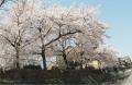 鴨川と本能寺 (1)