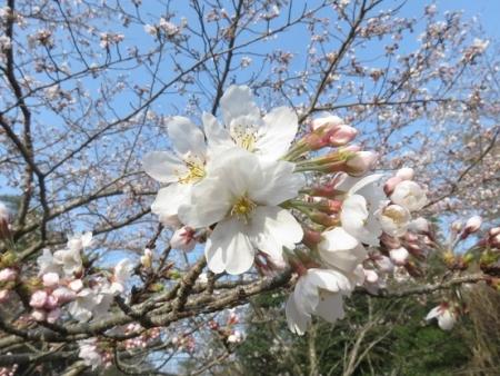 小岱山山開き 2018-03-25 002