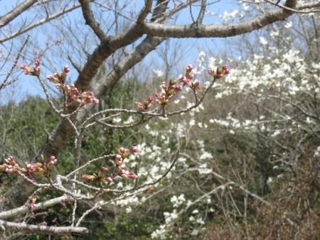 小岱山山開き 2018-03-25 091