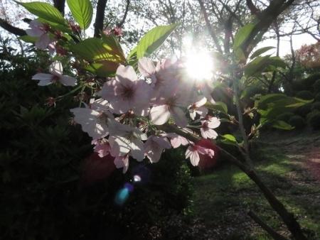 花鳥清水山 2018-04-02 018