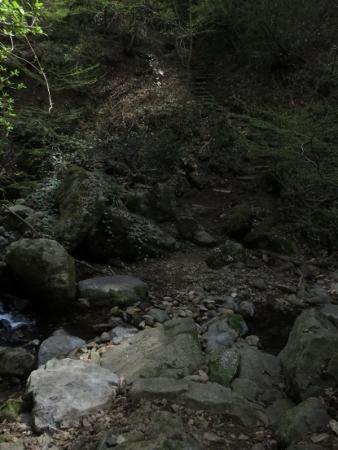 麻生池 2018-04-10 067
