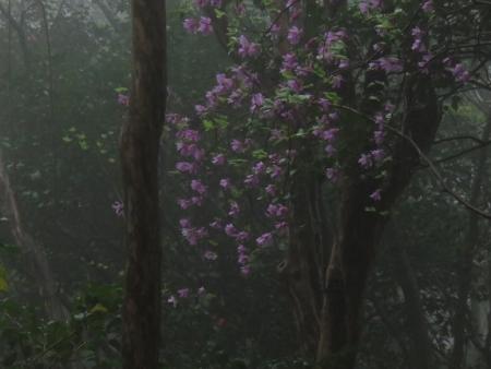 カラ迫岳山開き 2018-04-15 094