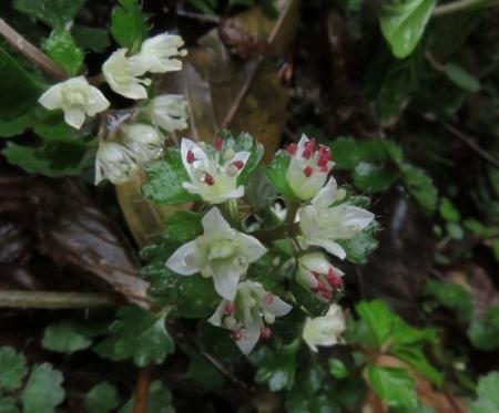 カラ迫岳山開き 2018-04-15 175