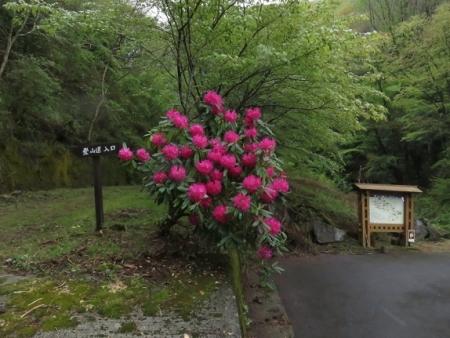 カラ迫岳山開き 2018-04-15 189