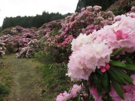 カラ迫岳山開き 2018-04-15 213