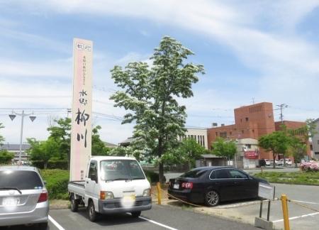 春柳川ナンジャモンジャの花 2018-04-26 012
