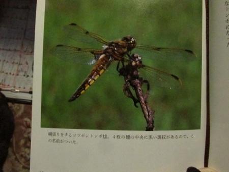 蜻蛉の本 1980-01-01 005