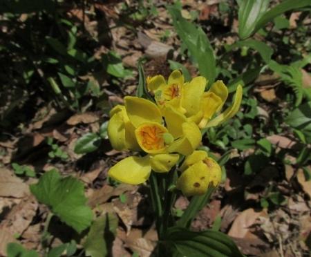 ハンカチの花 1980-01-01 038