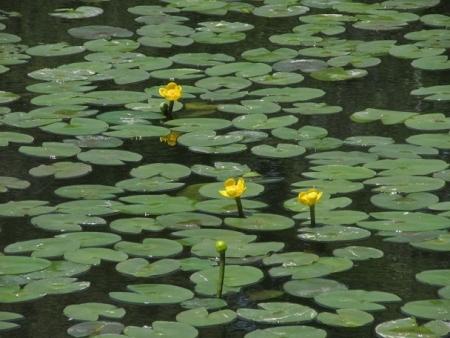 ハンカチの花 1980-01-01 064
