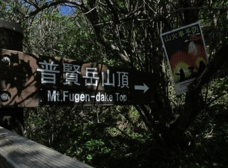 雲仙ヒカゲツツジ 1980-01-01 099